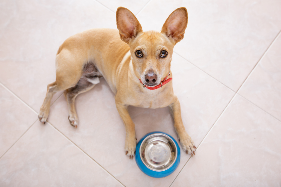 healthiest food for dogs