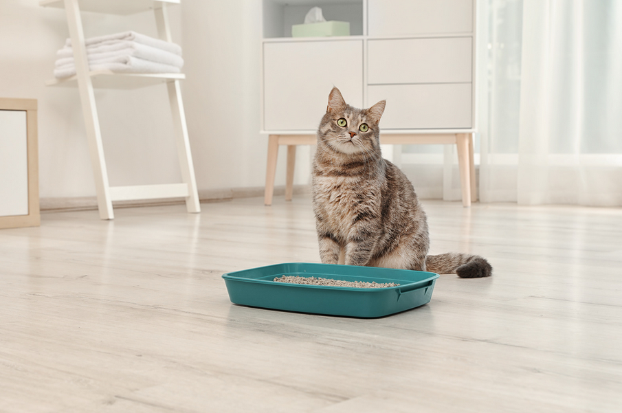 best cat food for firm stool and less waste