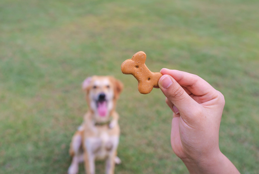 how to stop your dog barking at other dogs on your walks