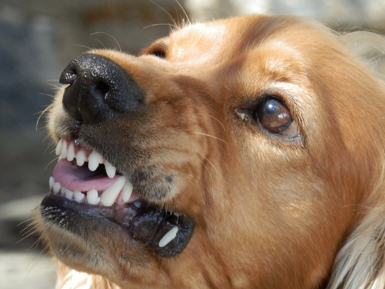 How To Find Dog Boarding For Aggressive Dogs