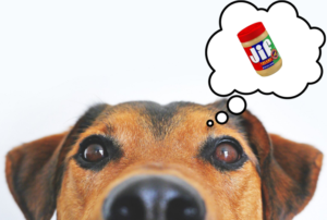 is jif peanut butter safe for dogs