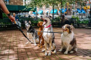 How Much Are Dog Sitter Rates Per Day?