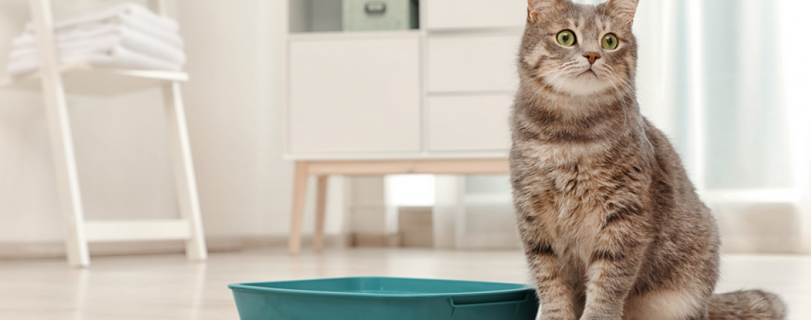 cat not using litter box all of a sudden